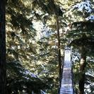 Photo of Whistler Zipline Adventure in Whistler Canopy Walk