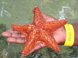 Handling different sea creatures - amazing , Tracie B - April 2013