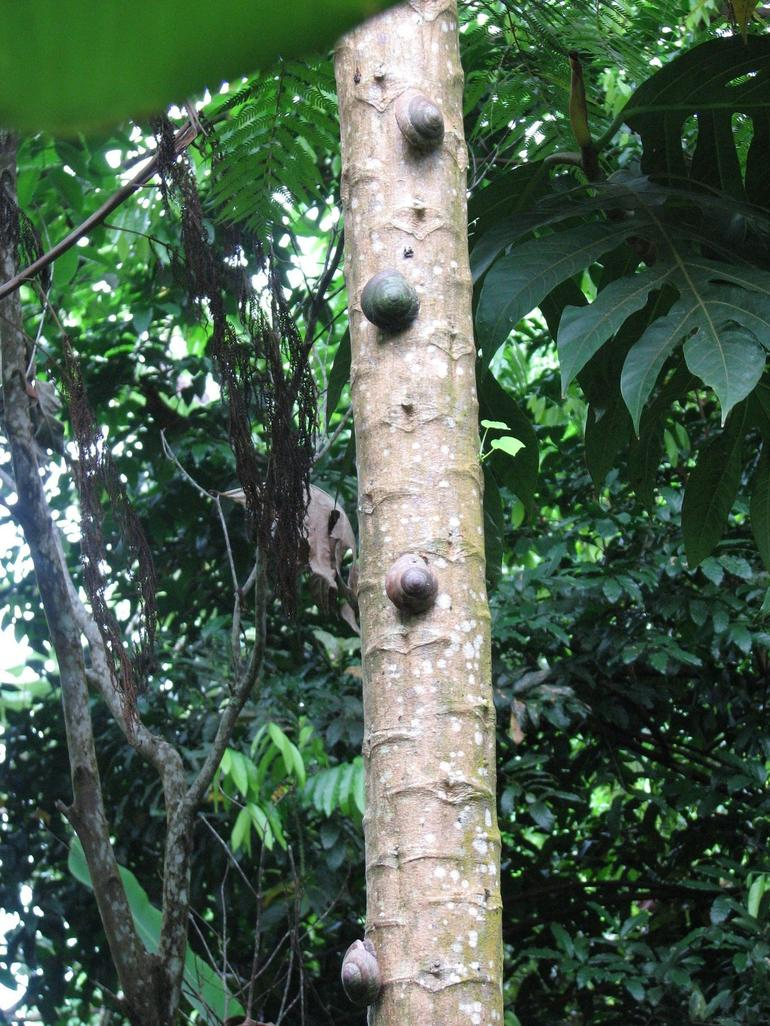 Snails on a tree - San Juan