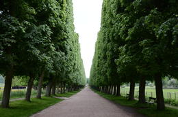 Photo of Paris Versailles by Bike Day Tour Garden Path
