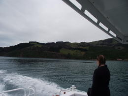 Photo of Christchurch Akaroa Swim with Dolphins Tour from Christchurch On the water and loving it!!