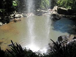 Photo of Brisbane Springbrook National Park Discovery Full-Day Bushwalk including Glow Worm Tour Paradise!