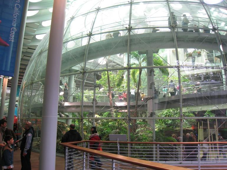 SF Academy of Science - Rain Forest - San Francisco