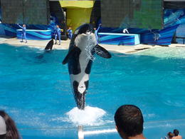 Photo of Anaheim & Buena Park SeaWorld San Diego with Transport Shamu Show