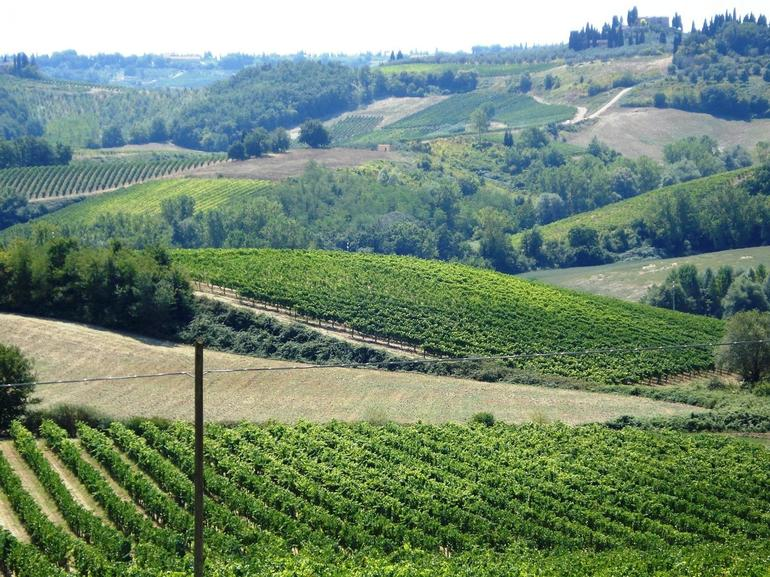Wine Estate - Florence