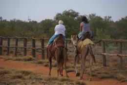 Photo of Alice Springs Alice Springs to Uluru (Ayers Rock) One Way Shuttle Camels