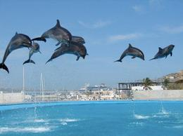 Photo of Los Cabos Swim with the Dolphins in Cabo San Lucas Dolphin's Jumping