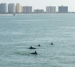 Photo of Tampa Clearwater Dolphin-Watching Tour Fisrt sight of the dolphins