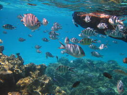 Photo of Bora Bora Bora Bora Snorkel, Sharkfeeding and Lagoonarium Full-Day Tour including Picnic Lunch IMG_0152