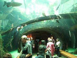 The underwater walkway at the base of the rain forest walk., Global Nomad - February 2009