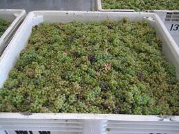 Photo of   Whitehall Lane Sauvignon Blanc