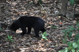 There is a Sun Bear conservation area at Sepilok, worth a visit , Jean-Guy R - May 2016