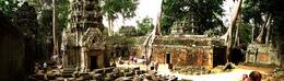 The temple of Ta Prohm were trees are growing out of the ruines , C S - August 2012