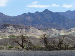 This photo is a composite of the Death Valley experience...so much raw beauty, variety of color, texture and barren expanse. It also shows that with even a sprinkle of water something green will..., Deborah M - April 2014
