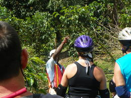 Photo of Ocho Rios Blue Mountain Downhill Bike Tour with Transport from Ocho Rios blue mountain education