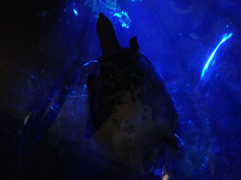 A turtle swam above us in the tunnel!