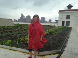 Our group were visiting the roof top garden, I felt like a ripe red tomato ready for the picking! , Kaye G - June 2013