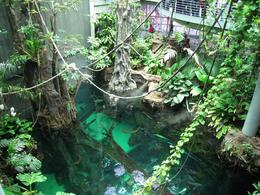 Another shot of the rain forest., Global Nomad - February 2009
