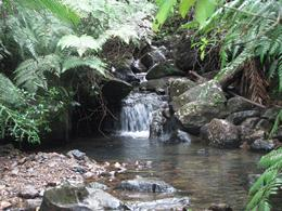 This is one of the many areas of flowing waters throughout the rain forest that we saw while hiking. - August 2009