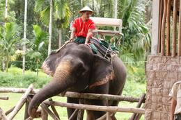 Photo of Phuket Khao Sok Full Day Jungle Safari from Phuket Amazing Elephant Ride
