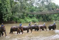 Photo of Chiang Mai & Chiang Rai Chiang Dao Elephant Jungle Trek and Ping River Rafting Tour from Chiang Mai