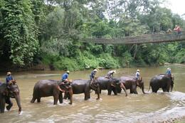 Photo of Chiang Mai & Chiang Rai Chiang Dao Elephant Jungle Trek and Ping River Rafting Tour from Chiang Mai Elephants on the river