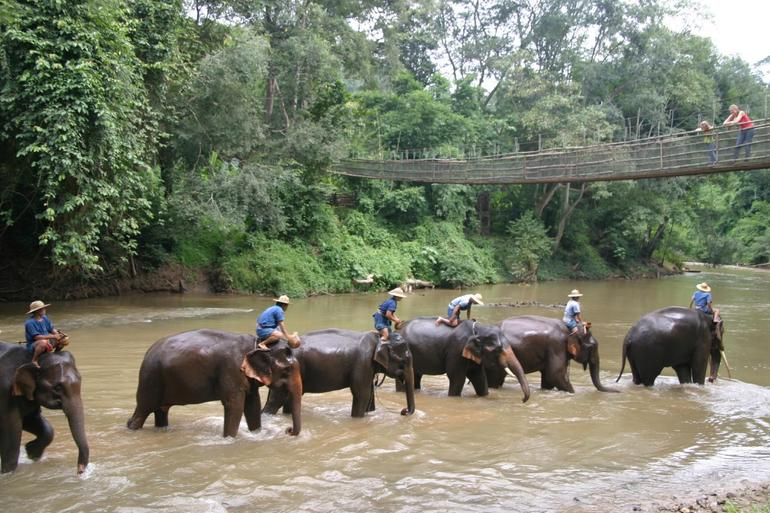 Elephants on the river - Chiang Mai