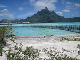 Photo of Bora Bora Bora Bora Snorkel, Sharkfeeding and Lagoonarium Full-Day Tour including Picnic Lunch IMG_0175