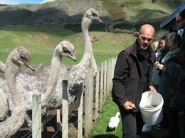 Photo of Auckland Waitomo Caves and Rotorua Day Trip from Auckland Pretty Ostriches
