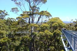 Treetop Walk, Valley of the Giants, Leah - April 2011