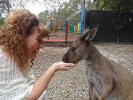 Photo of Sydney Hunter Valley Wineries and Wilderness Small-Group Tour Meeting a kangaroo for the first time!