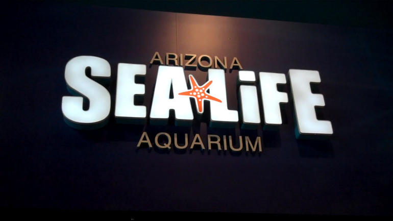 SEA LIFE Arizona - Phoenix