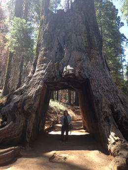 daughter on tour of Yosemite National Park , Elizabeth G - August 2014
