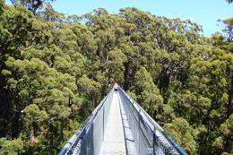 Photo of Perth Valley of the Giants and Tree Top Walk Day Tour from Perth Tree Top Walk