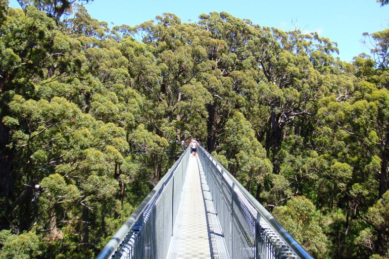 Tree Top Walk - Perth