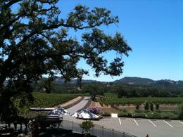 Photo of Napa & Sonoma Wine Country Tour by Horse and Carriage View from Hanna with the Carriage.JPG