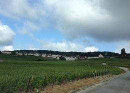 Our guide drove through some of the Hautviller vineyards just outside of town , allenr - May 2014