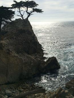 Photo of San Francisco Monterey, Carmel and 17-Mile Drive Day Trip from San Francisco Beautiful coastline !
