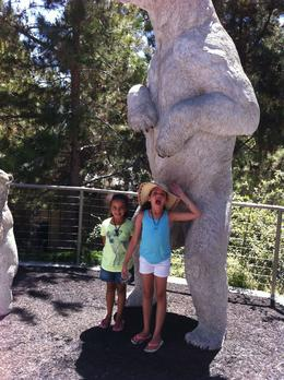 Photo of San Diego San Diego Zoo Giant bear!