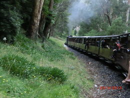 Photo of Melbourne Yarra Valley Wineries and Puffing Billy Steam Train Day Tour from Melbourne chug chug chug!
