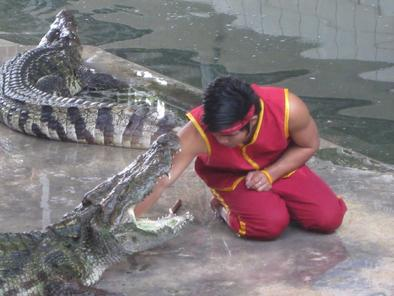 Samphran elephant & crocodile shows – a must-see experience