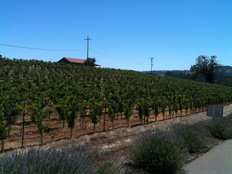 Passing Vineyards on the Carriage.JPG - Napa & Sonoma