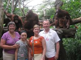 Photo of Singapore Singapore Zoo Breakfast with Orangutans Breakfast Time