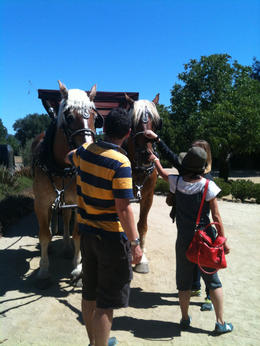 Photo of Napa & Sonoma Wine Country Tour by Horse and Carriage Horse pets.JPG