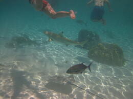 Photo of Bora Bora Bora Bora Snorkel, Sharkfeeding and Lagoonarium Full-Day Tour including Picnic Lunch IMG_0204