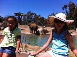 Photo of San Diego San Diego Zoo Big elephant