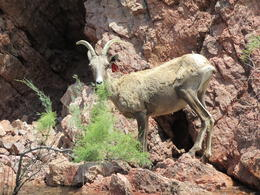 We were all watching for long horn sheep and saw plenty! , Gary C - July 2013