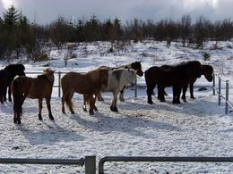 Photo of   Hardy beasts, Viking horse riding trip