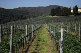 Photo of Florence Vespa Small Group Day Trip to the Chianti Wine Region Vineyard