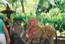 This colorful donkey is at Dunns River Falls to great you as you begin your journey and say goodbye as you leave., Benni R - April 2008